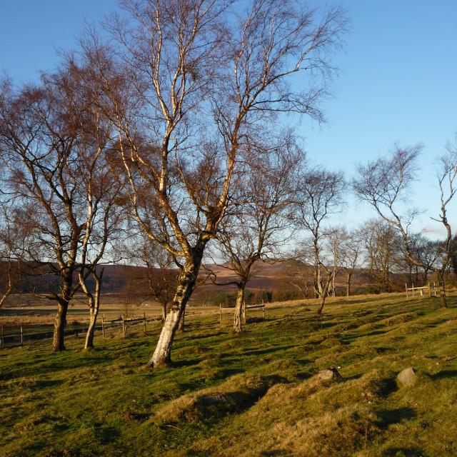 """Derbyshire moors"" stock image"