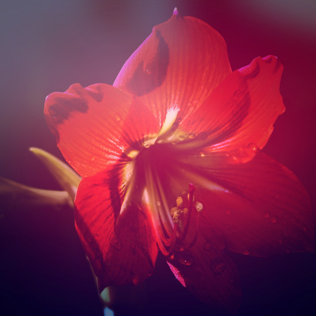 """Flower 