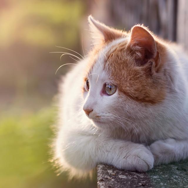 """""""Cat in sunlight"""" stock image"""