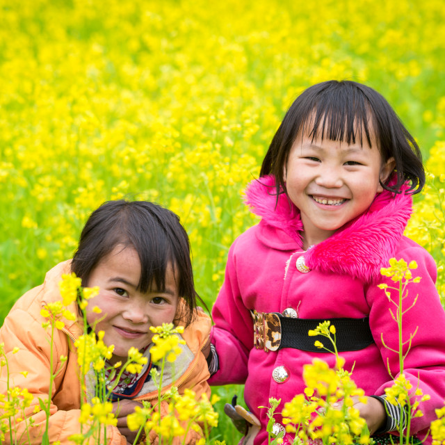 """""""DONG VAN, HA GIANG, VIETNAM, March 11th, 2016: Unidentified ethnic minority kids with baskets of rapeseed flower in Hagiang, Vietnam. Hagiang is a northernmost province in Vietnamr in Hagiang"""" stock image"""