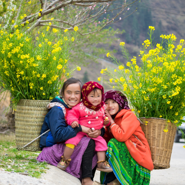 """""""DONG VAN, HA GIANG, VIETNAM, March 11th, 2016: Unidentified ethnic minority kids with baskets of rapeseed flower in Hagiang, Vietnam. Hagiang is a northernmost province in Vietnam"""" stock image"""