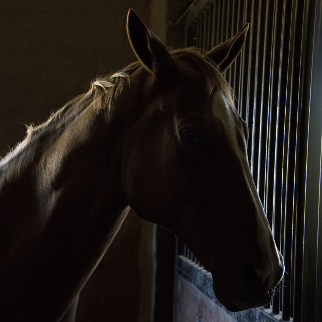 """Horse in stables early morning"" stock image"