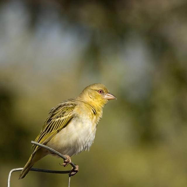 """""""DSC_3851- Bird in my Garden"""" stock image"""