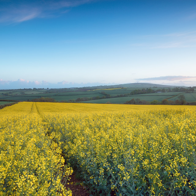 """""""Spring Fields in Cornwall"""" stock image"""