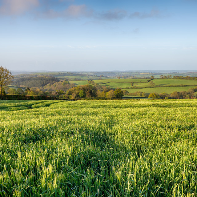 """""""Green Countryside in Cornwall"""" stock image"""