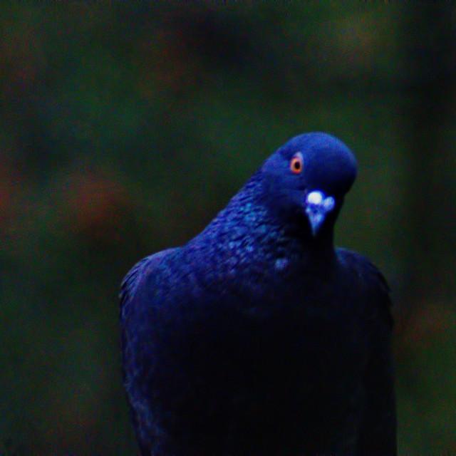 """bird looking"" stock image"