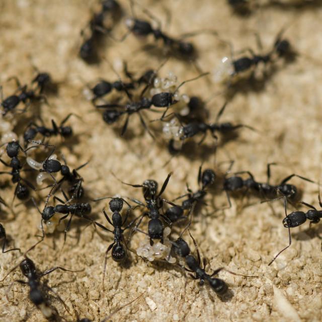 """""""Ants"""" stock image"""