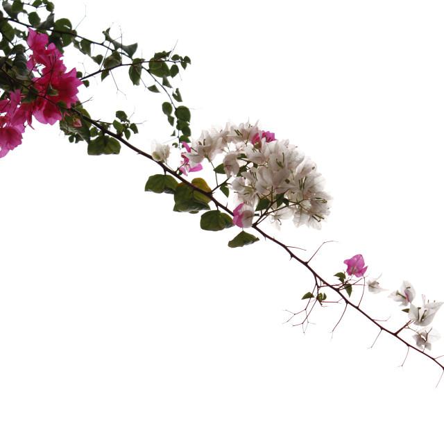 """Hangin' Flowers"" stock image"