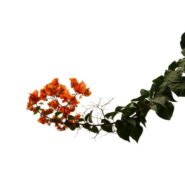 """""""Orange of Daylight"""" stock image"""