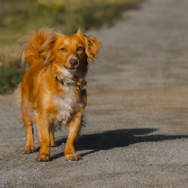 """""""dog II"""" stock image"""