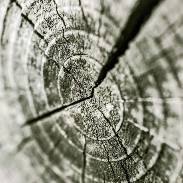 """Concentric rings of a trunk"" stock image"