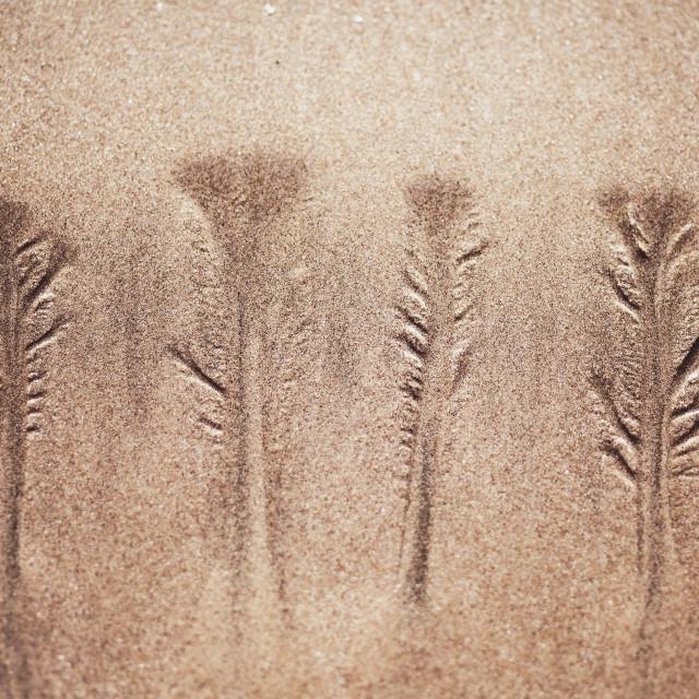 """Little Trees"" stock image"