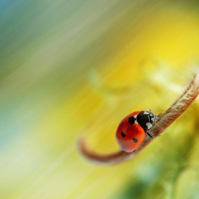 """""""ladybug on a beautiful background"""" stock image"""