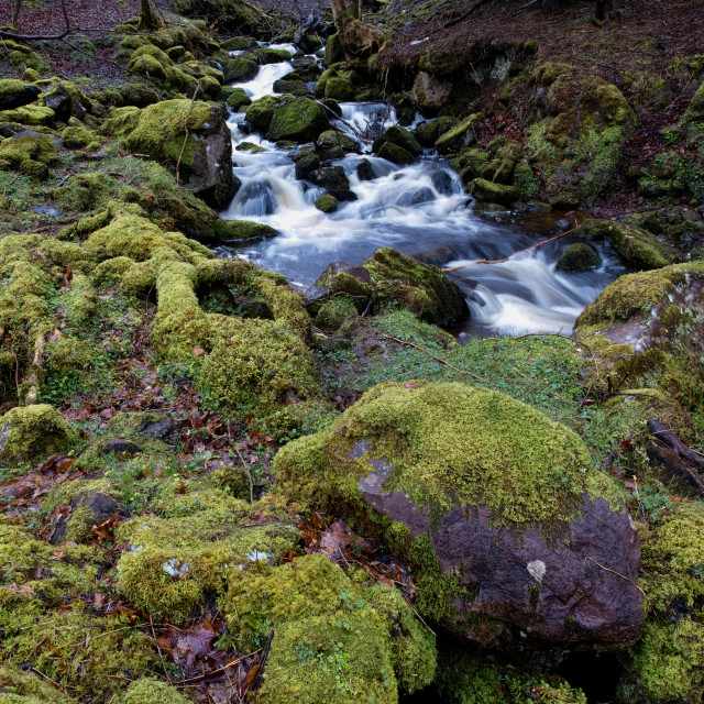 """""""river moss"""" stock image"""