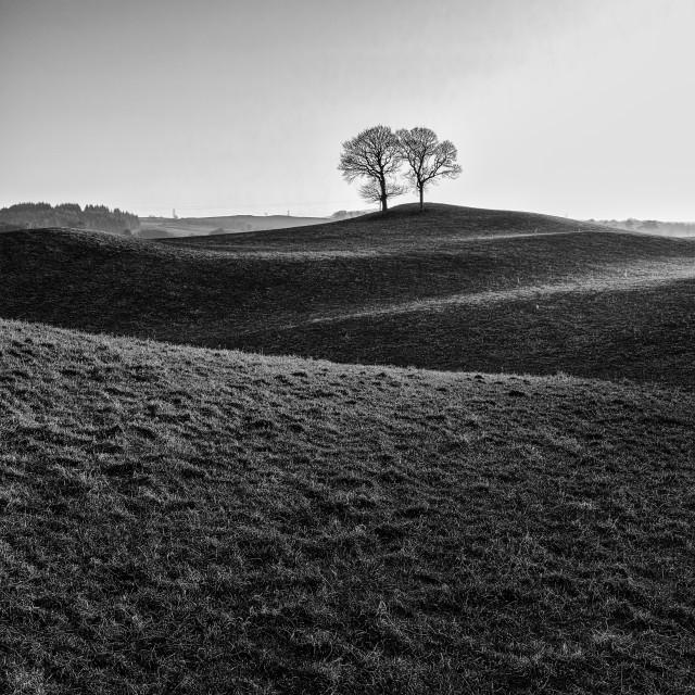 """lone trees"" stock image"