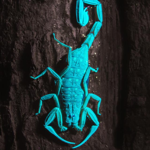 """Ultra Violet Scorpion"" stock image"