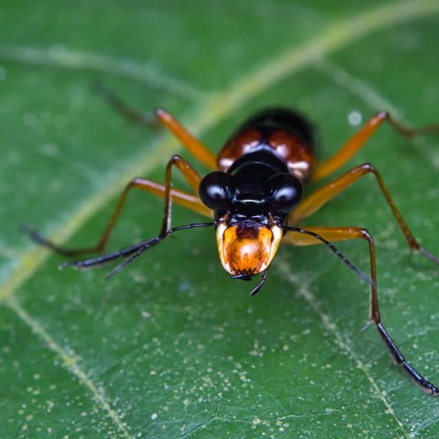 """Tiger Beetle"" stock image"