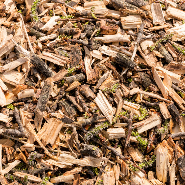 """""""Close Up of Crushed Tree Branches"""" stock image"""