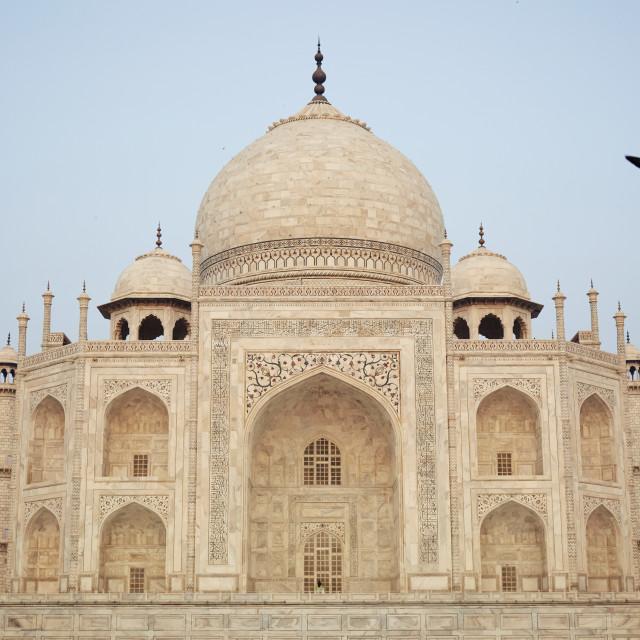 """""""Morning Taj"""" stock image"""