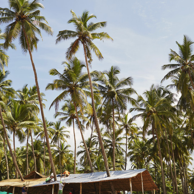 """Palms and Huts"" stock image"