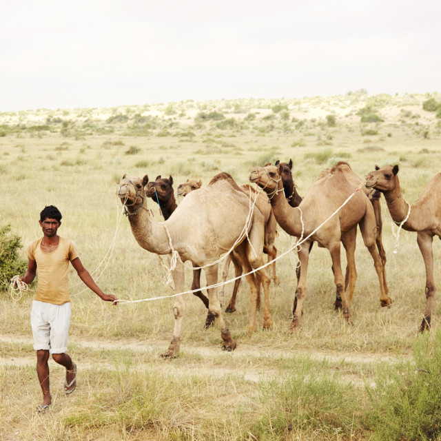 """The Camel Man"" stock image"
