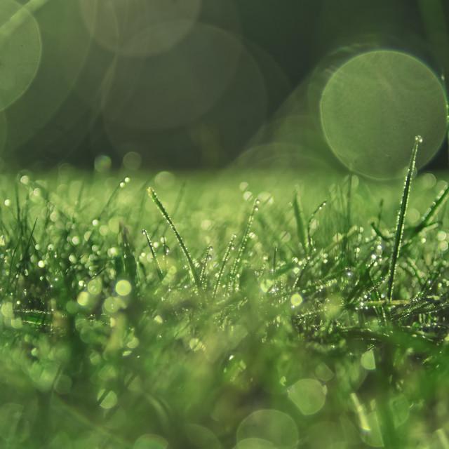 """Grass Circle Bokeh"" stock image"