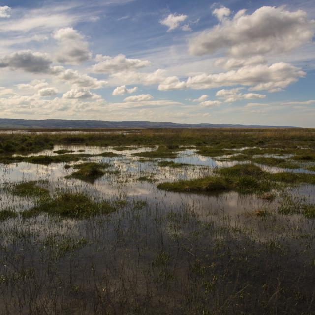 """Neston Marsh"" stock image"