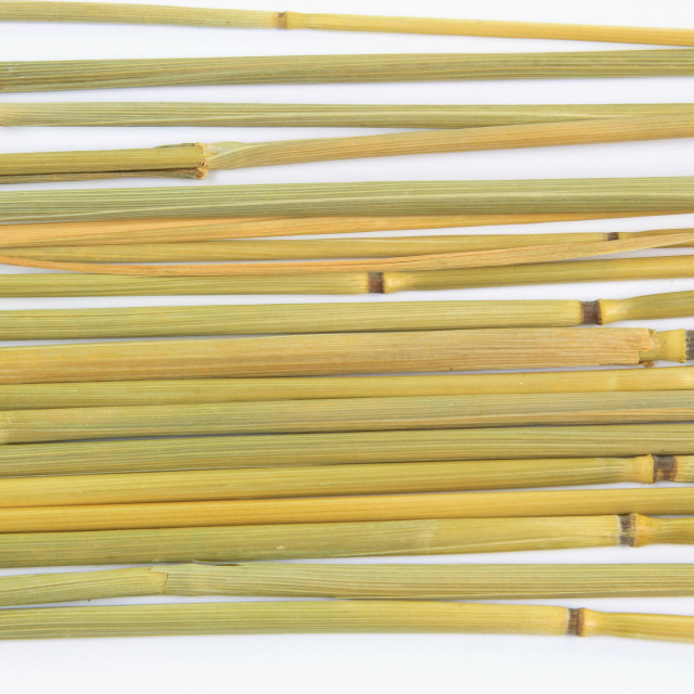 """Group of stalks."" stock image"