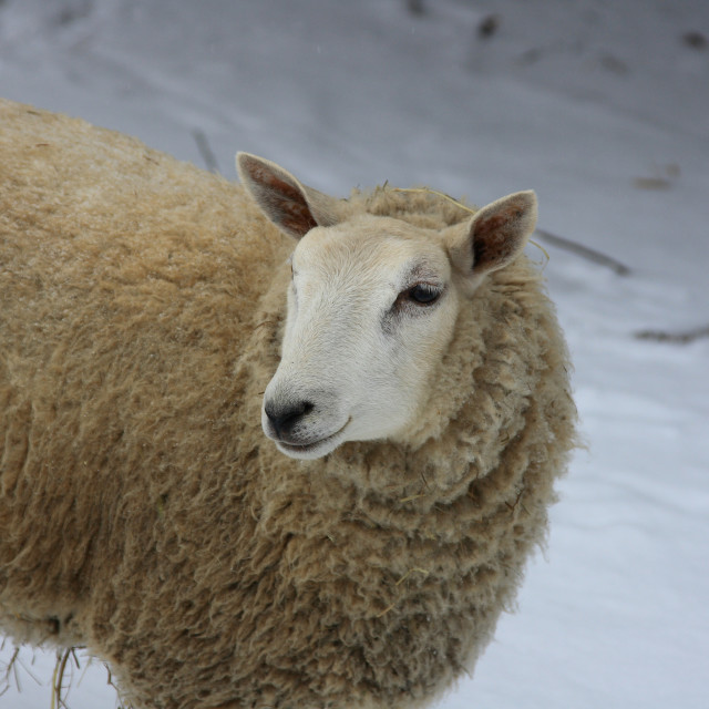 """Winter in the farm."" stock image"