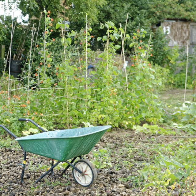 """Allotment Garden"" stock image"