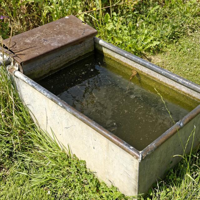 """""""Water Butt, Allotment Garden"""" stock image"""