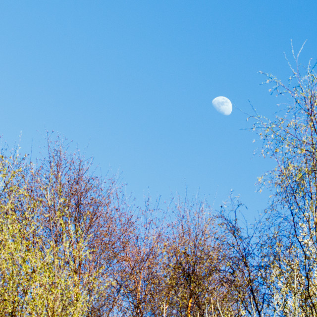 """Moon and trees"" stock image"