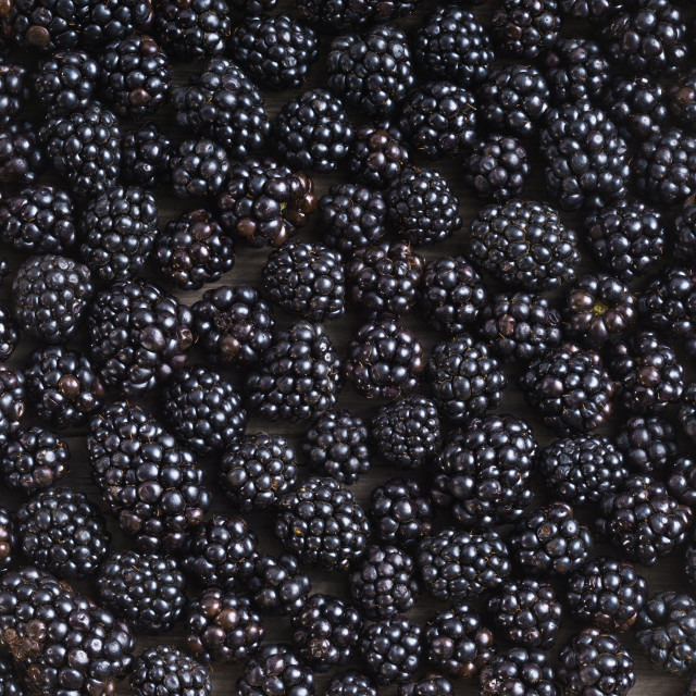 """Blackberries background. Close up, top view, high resolution product."" stock image"