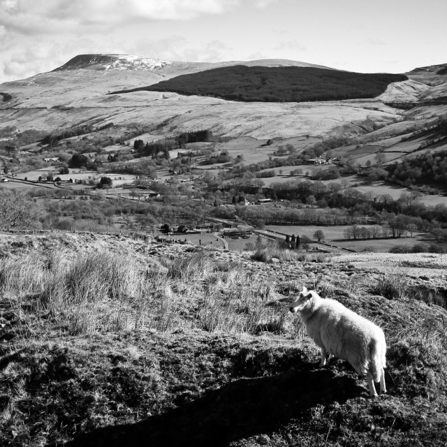 """Sheep in the brecon Beacons"" stock image"