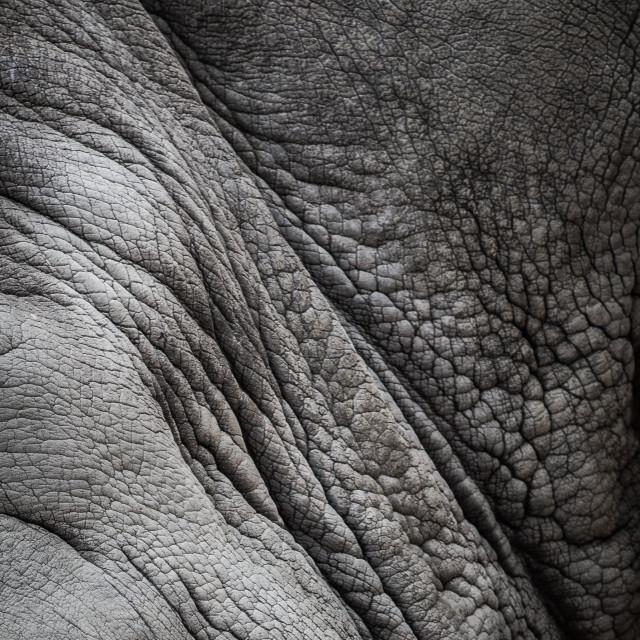 """Rhinoceros skin texture"" stock image"