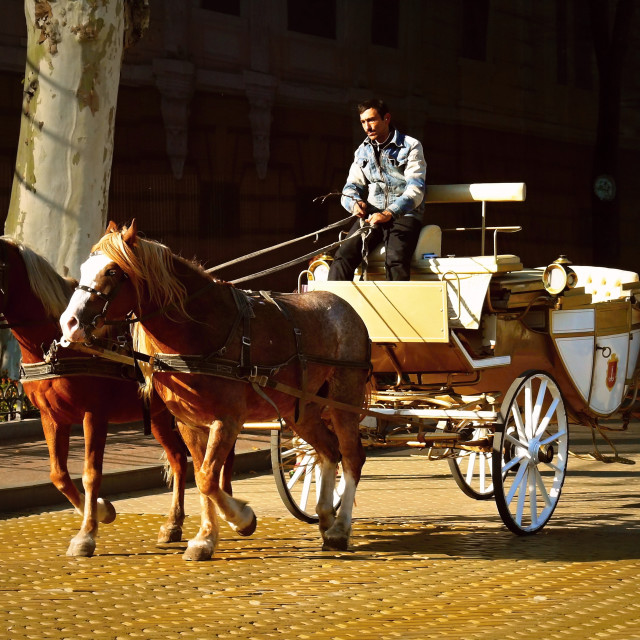 """""""carriage with horses"""" stock image"""