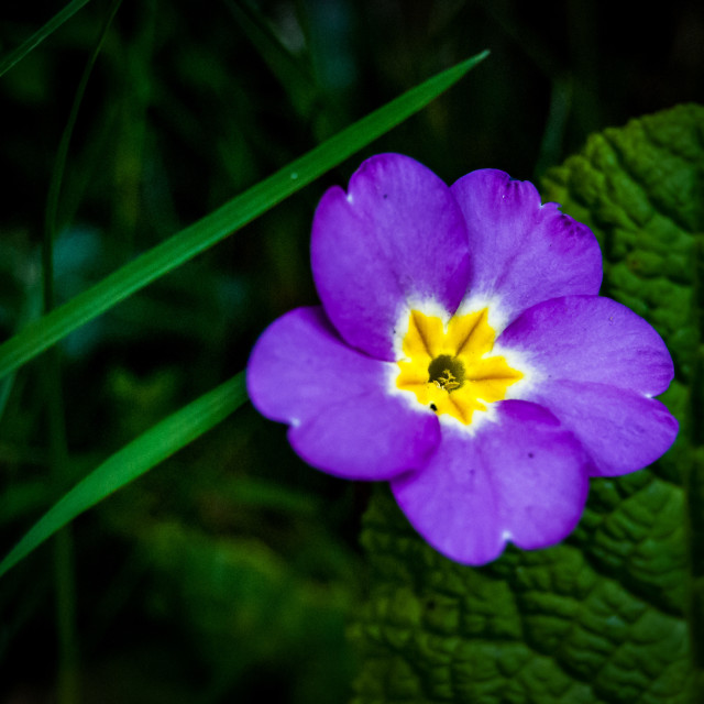 """""""Purple and yellow flower"""" stock image"""