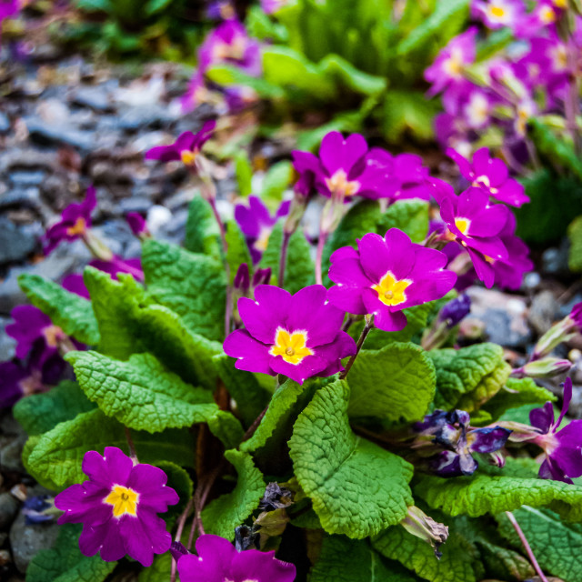 """""""Spring flowers - purple and yellow"""" stock image"""