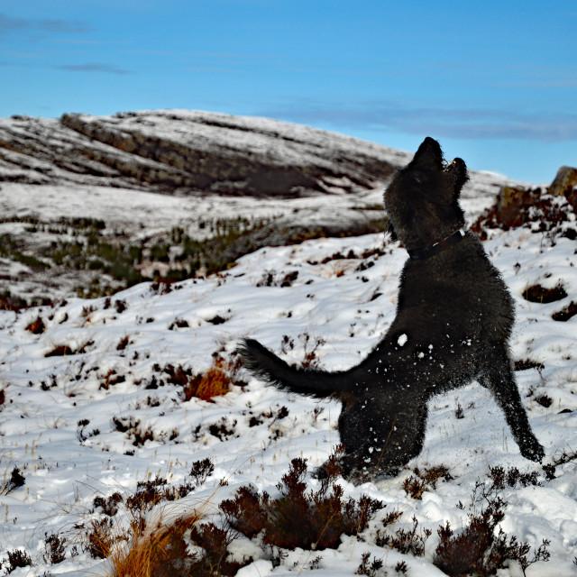 """Catching Snowballs"" stock image"