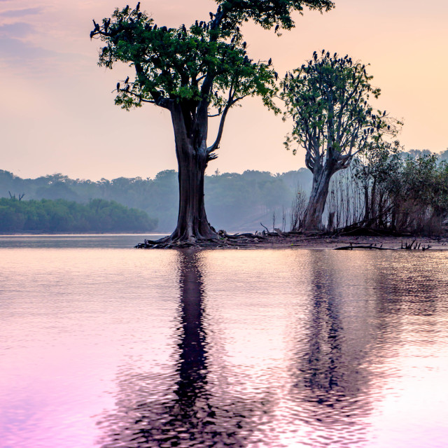 """""""Ever-changing colours of the Amazon River"""" stock image"""