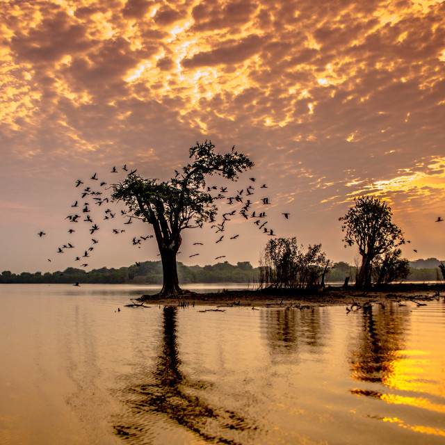 """Ever-changing colours of the Amazon River"" stock image"
