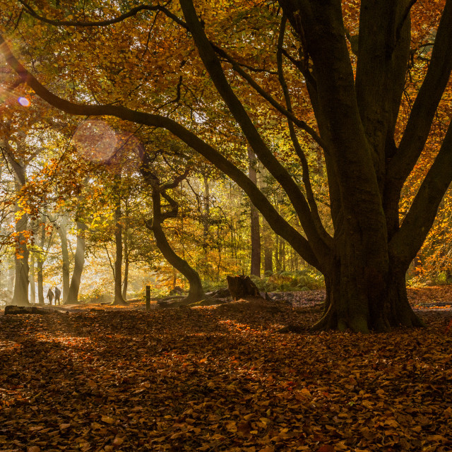"""Autumn Woodland"" stock image"