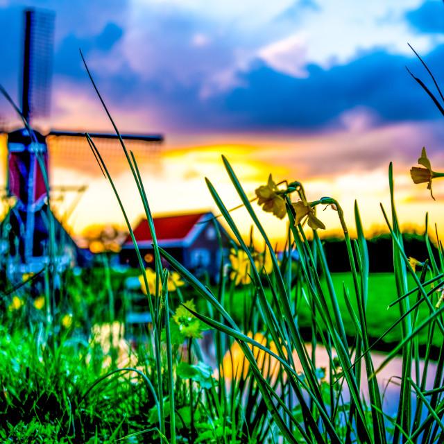 """Sunrise at the Dutch polder"" stock image"