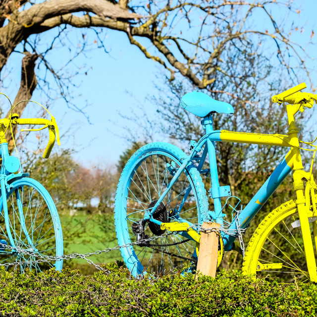 """Tour de Yorkshire 2016 painted bikes in hedge 1"" stock image"