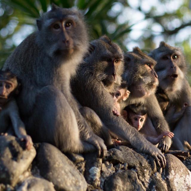 """The Monkeys"" stock image"