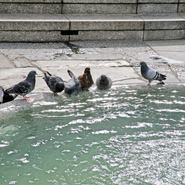 """""""Pigeons by the fountain,1,Zagreb, 2016."""" stock image"""