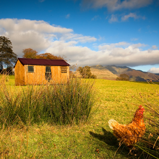 """The Chicken Coop"" stock image"