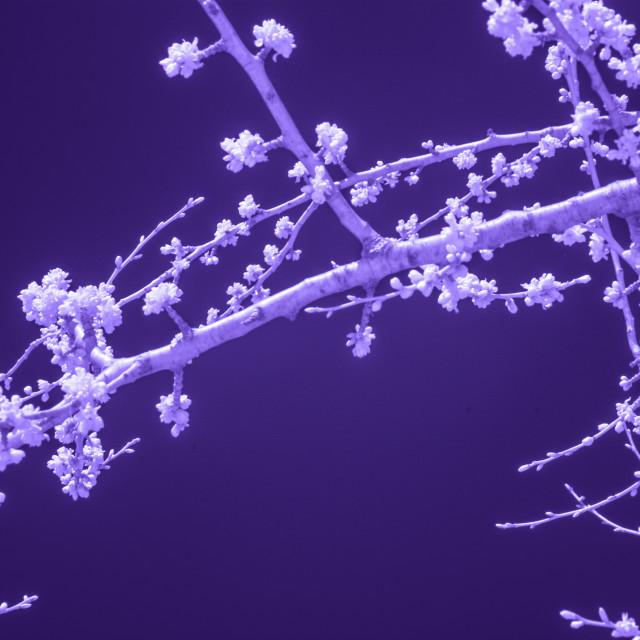 """""""Dark Spring 5"""" stock image"""