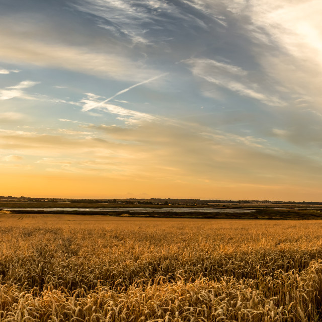 """Barley Sunset"" stock image"