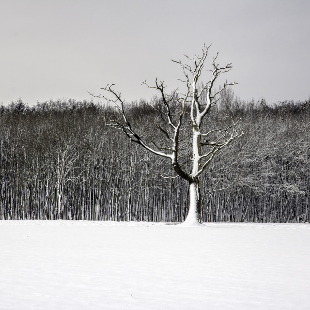 """The Skeleton Tree"" stock image"